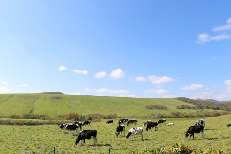 別海町的生乳產量是全日本第一。