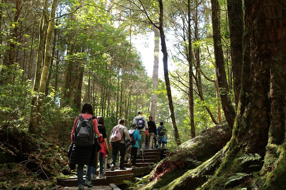 在森林浴步道中享受芬多精(林務局) (2)(001)